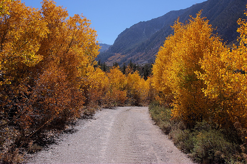 In the vicinity of Willow Campground along South Lake Road, there's a dirt spur road where willow and aspen were on full display.