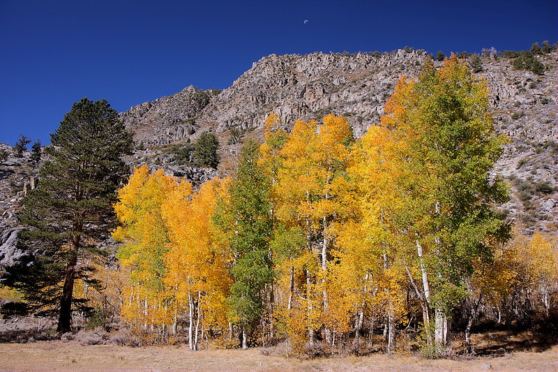 On the road to North Lake one can pull off the road and hike in the area of Lake Sabrina's outlet creek called the Middle Fork Bishop Creek. Cottonwoods, willow, aspen and Ponderosa Pine along with a half-moon create a pleasing picture.