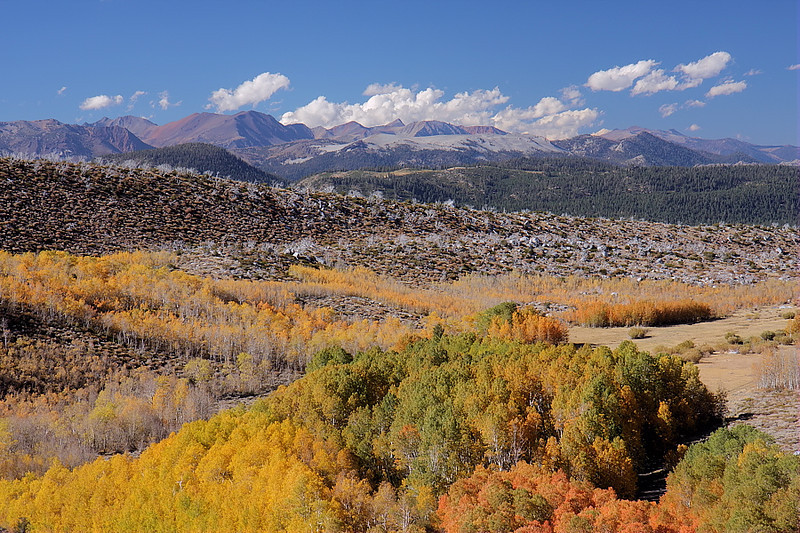 Further down the road, the flat top of Mammoth Mountain can be easily seen, creating a mountainous backdrop to Laurel Canyon's fall display.