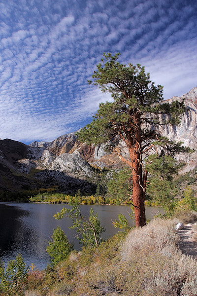 """A little further up the trail I take this portrait shot, with the trail on the right, and a lone Ponderosa Pine reaching for the """"serrated"""" cloudscape."""