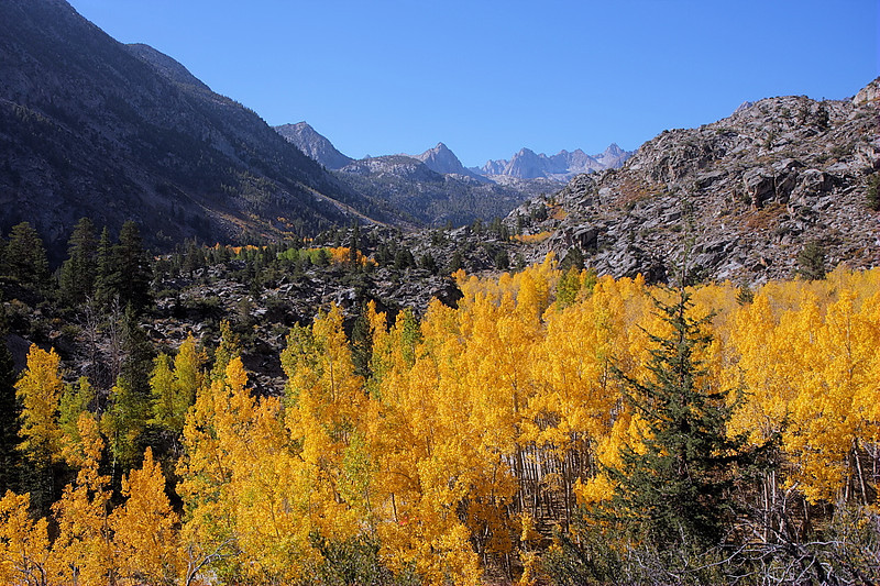 And now begins The Autumn Spectacle. And, for the first time in --- well, forever -- my timing was right. The willows, cottonwoods, and aspens were at about 75% of their color; ribbons and swaths of yellow, orange and ochre ran up and down the mountainsides. Here's the view from the road to North Lake looking west towards Lake Sabrina, which is just beyond the ridge. Photographers with tripods and point-and-shooters were out in force that day.