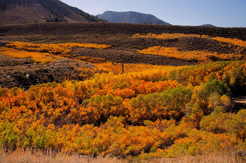 This is what I consider to be my best photo of the entire trip, as it's the reason why  came here -- seeing the autumnal glory of the eastern Sierra Nevada. The various shades of color are dazzling, and the trees seem to create a zigzag up the canyon wall.