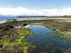 Tide Pools - Point Holmes, Comox