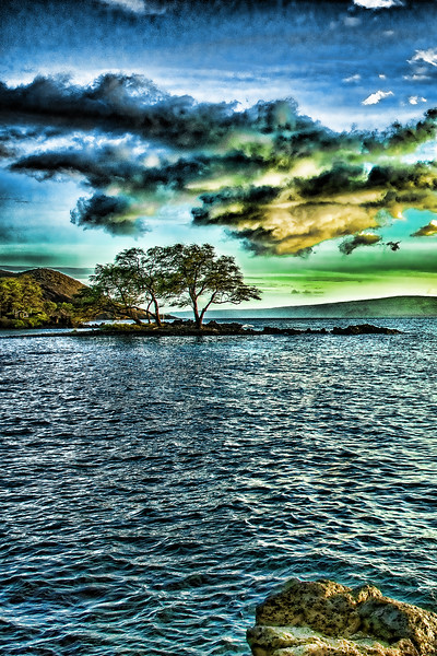 2 Trees on the Water
