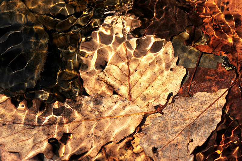 Leaves underwater 2