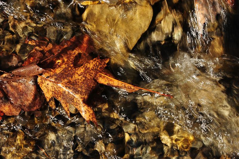 Leaves underwater 3