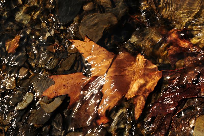 Leaves underwater 4