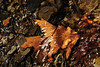 Leaves underwater 4