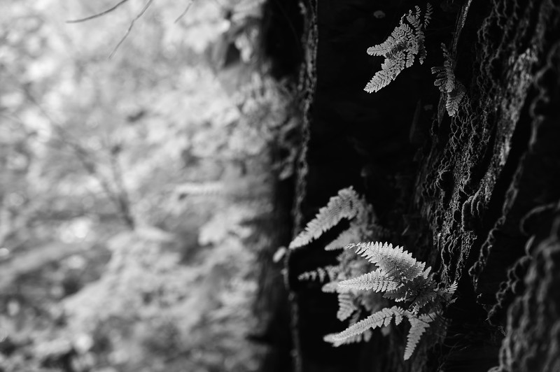 Buttermilk Falls 30 DSC_3538