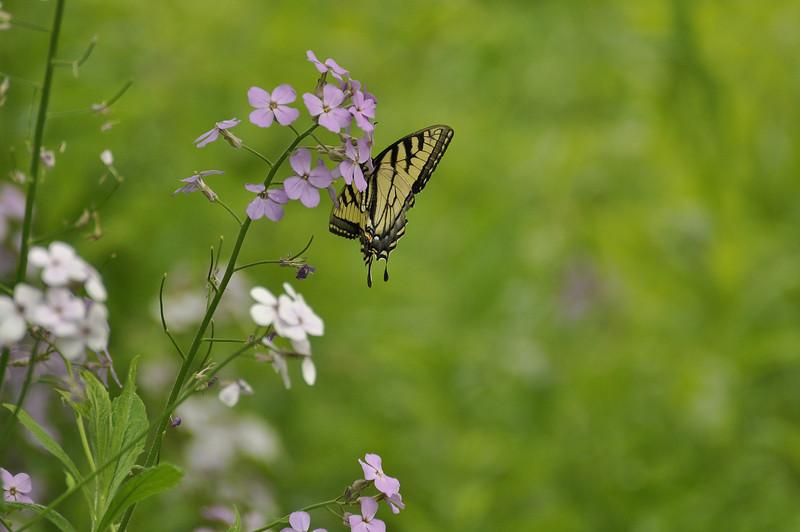 Butterfly 5_DSC8026