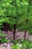 A Story of Spring #5 dreamy, Canadice Lake NY.