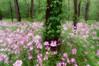 A Story of Spring #4 dreamy, Canadice Lake NY.
