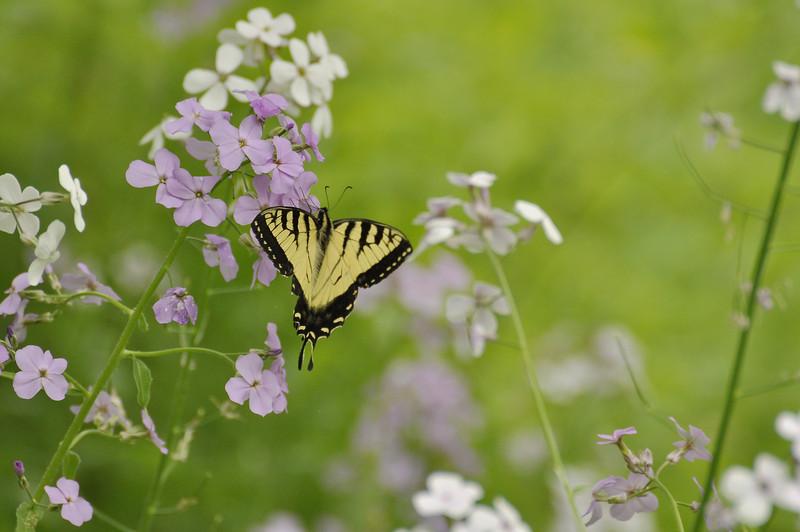 Butterfly 7_DSC8029