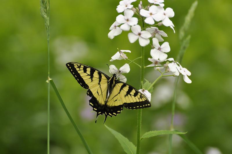 Butterfly 9_DSC8031