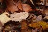 Raindrops on leaf, Canadice Lake NY.