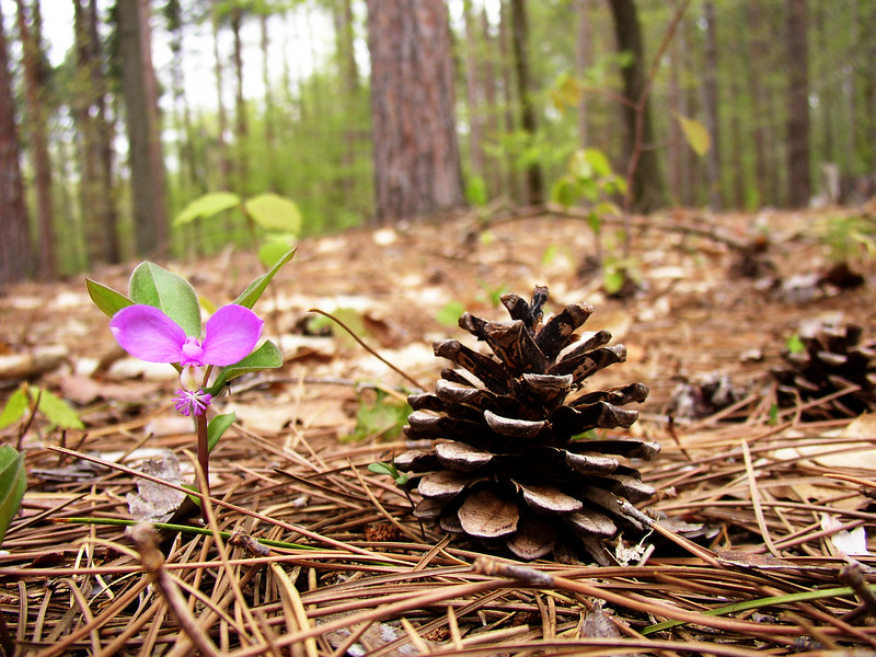 Forest floor in spring, Canadice NY.