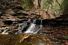 Conklin Gully 113009 7_DSC0018