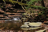 Conklin Gully 113009 22_DSC0053