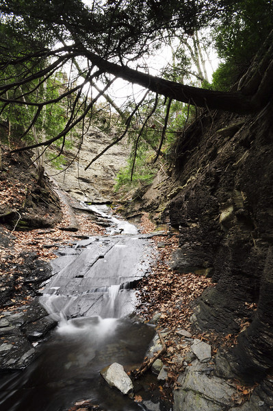 Conklin Gully 113009 30_DSC0076
