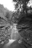 Conklin Gully 113009 27_DSC0067