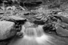 Conklin Gully 113009 11_DSC0029
