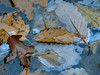 Ice and leaves #1, Conklin Gully.