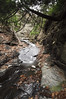 Conklin Gully 113009 29_DSC0068