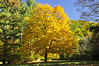 Letchworth 101109 28_DSC5644