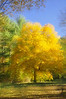 Letchworth 101109 30_DSC5647