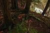 Lick Brook 41 fairie circle DSC_8679