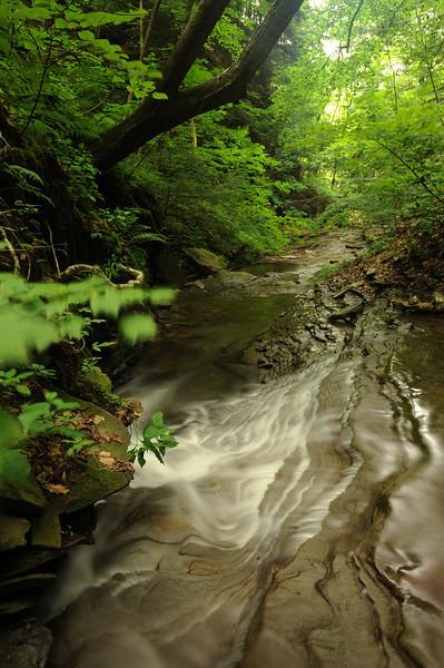 Creek 33 DSC_5006