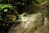 Creek 34 DSC_5007