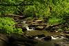 Creek 1 DSC_4929