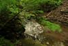 Creek 32 DSC_5003
