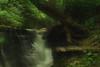 Creek 50 DSC_5049