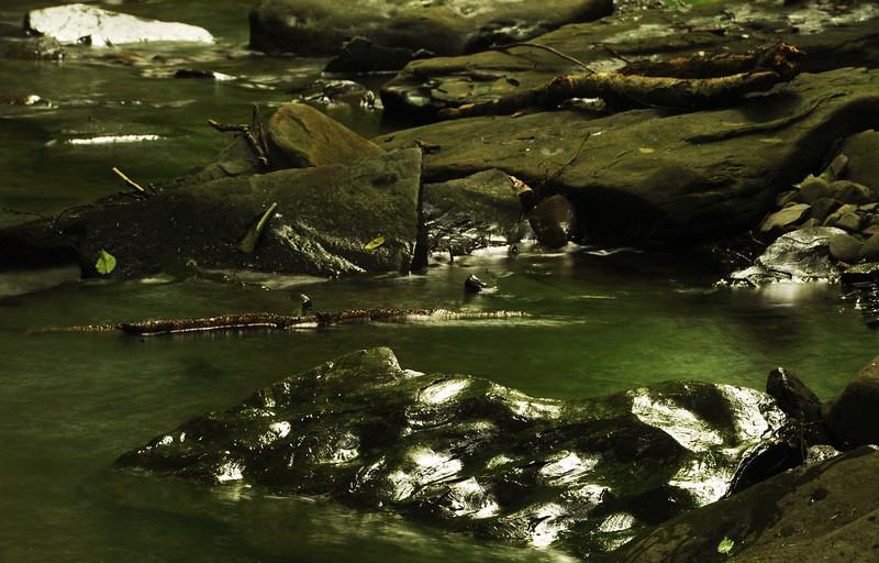 Creek 45 DSC_5038