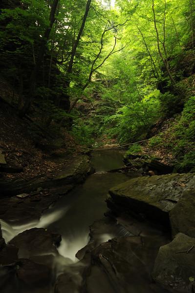 Creek 31 DSC_5002