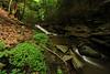 Creek 41 DSC_5020