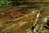 Creek 35 DSC_5009