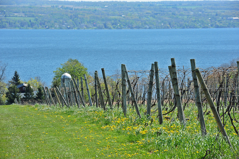 Cayuga Lake 1 DSC_0366