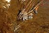 Wiscoy Falls 032711 42 DSC_7482