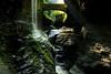 Watkins Glen 19 DSC_8464
