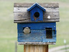 Country birdhouse, with the inhabitant giving us the stare down! Tarryall Colorado.