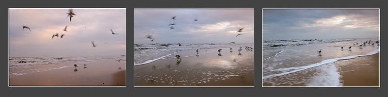20110115_SeagullsTriptych