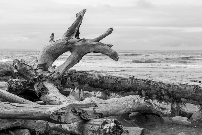 Ocean Shores, Washington. July 2019.