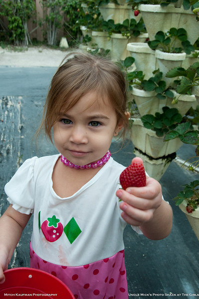 Summer at The Girls U-pick Strawberry Patch