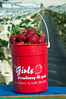 Strawberries in The Girls Bucket