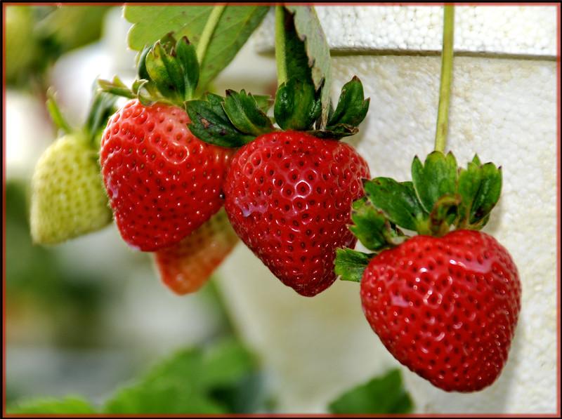 Strawaberries