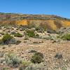 131 Cassidy Mine