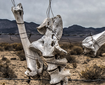 011 Hot Creek Valley, Nevada.